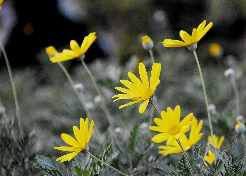 f:id:flowerTDR:20201222091817j:image