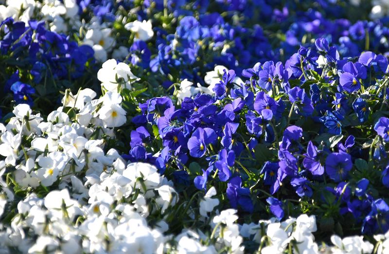 f:id:flowerTDR:20201224075505j:plain