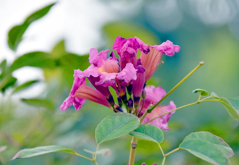 f:id:flowerTDR:20201225150212j:plain