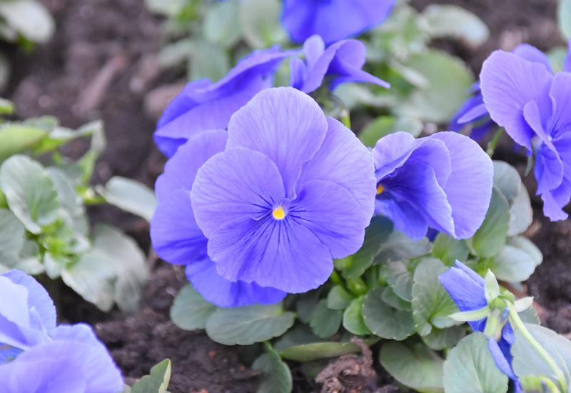 f:id:flowerTDR:20201226081942j:plain