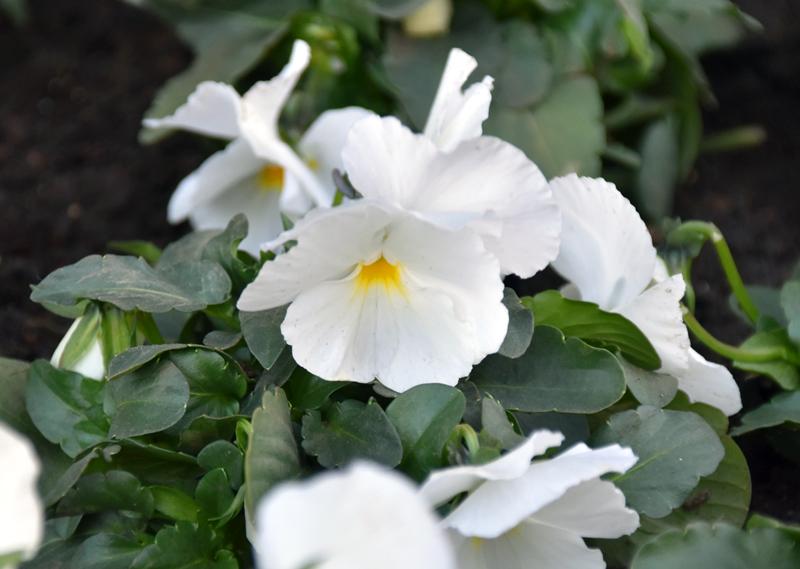 f:id:flowerTDR:20201226081949j:plain