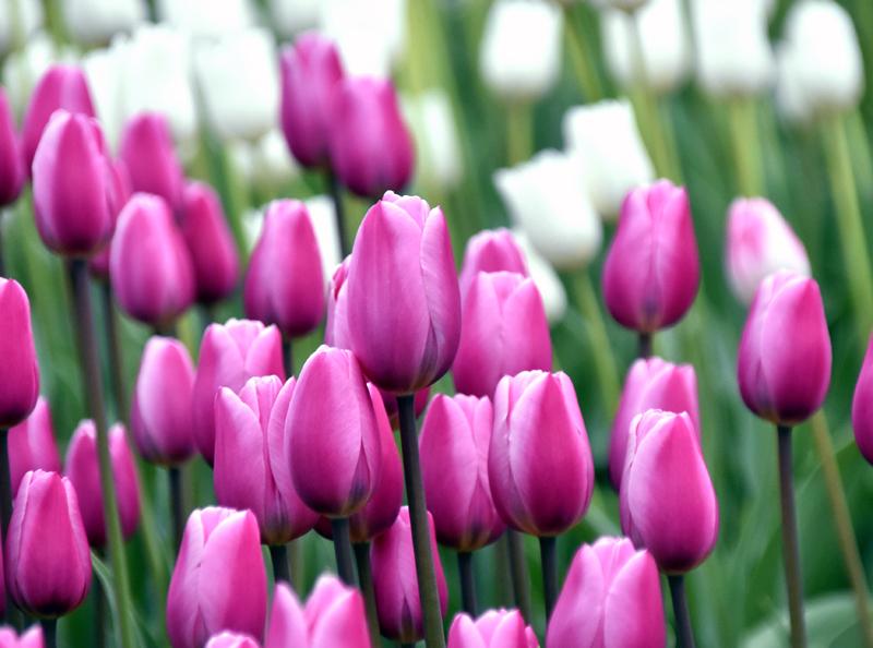f:id:flowerTDR:20201227093636j:plain