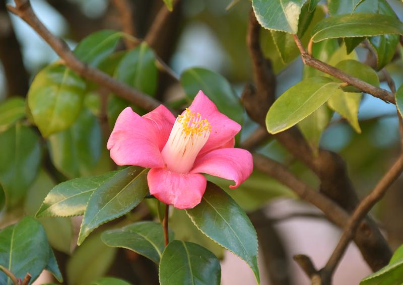f:id:flowerTDR:20201229075934j:plain