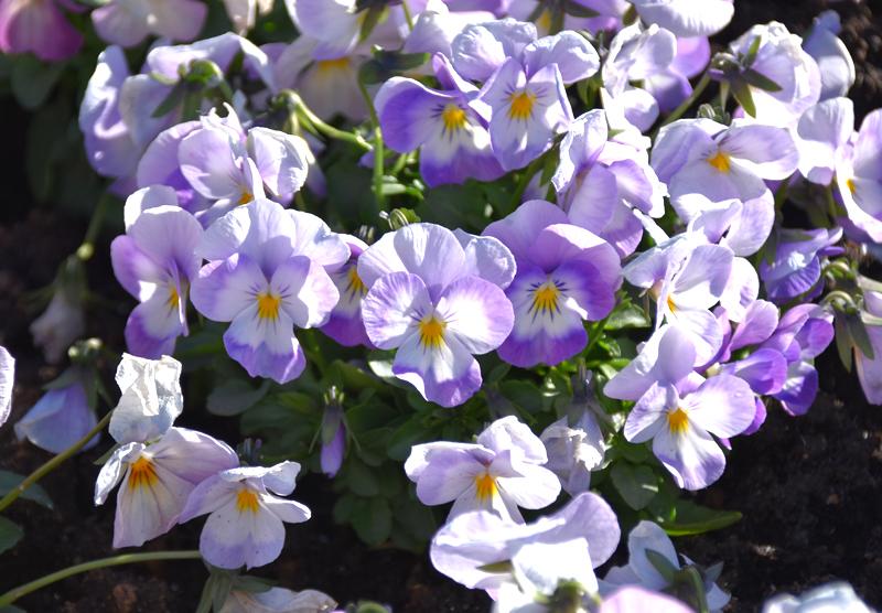 f:id:flowerTDR:20201230071311j:plain