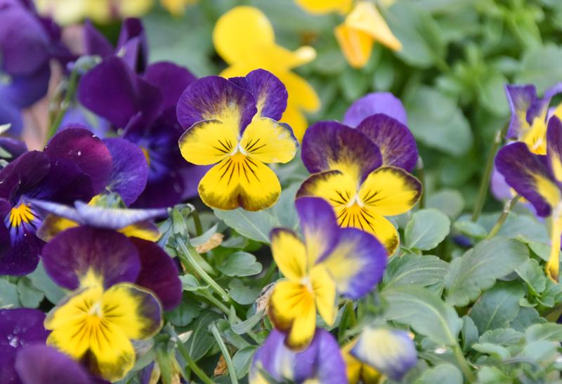 f:id:flowerTDR:20201230071534j:plain