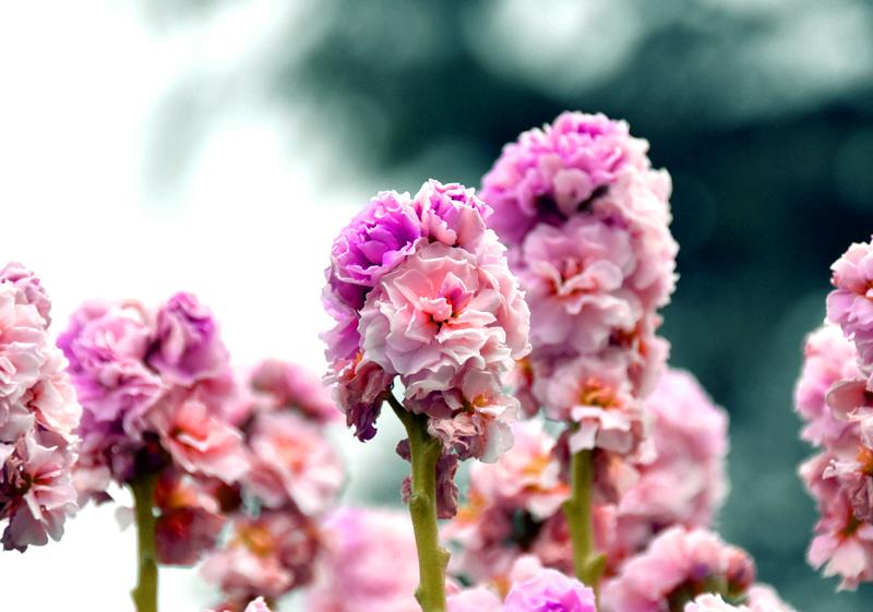 f:id:flowerTDR:20201230232858j:plain