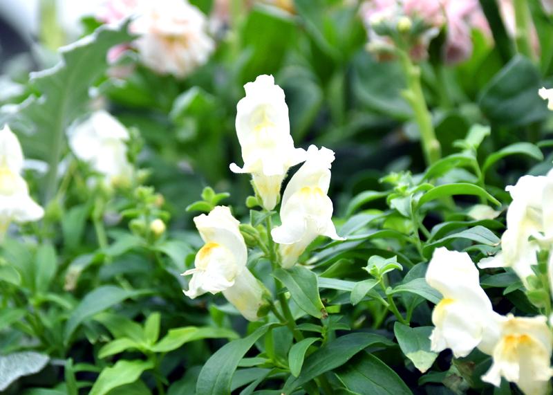 f:id:flowerTDR:20201230232930j:plain