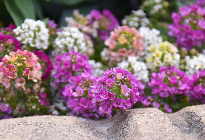 f:id:flowerTDR:20201230232947j:plain