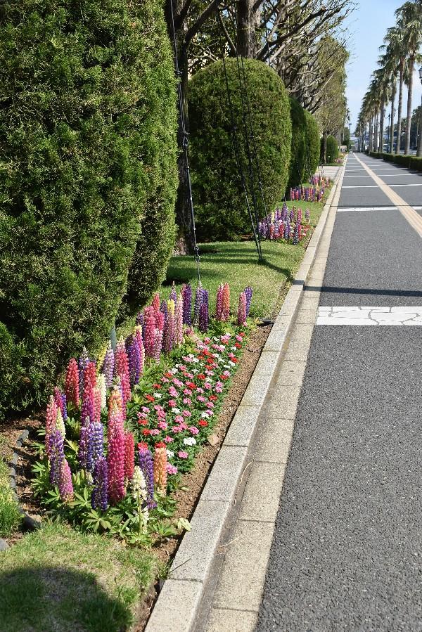 f:id:flowerTDR:20201231003640j:plain