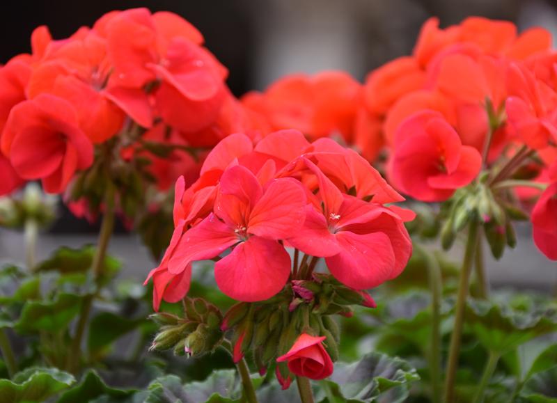 f:id:flowerTDR:20210103233910j:plain
