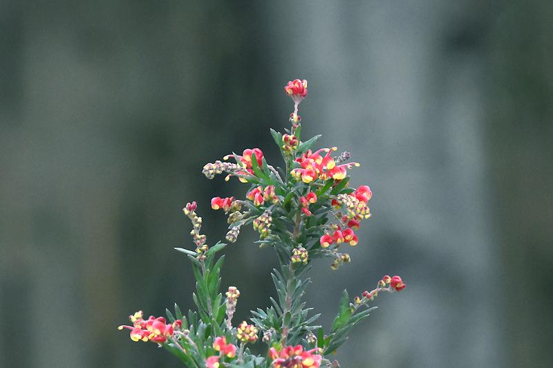 f:id:flowerTDR:20210105135950j:plain