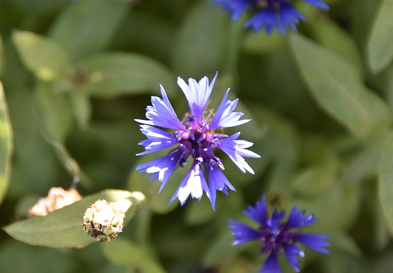 f:id:flowerTDR:20210108081416j:plain
