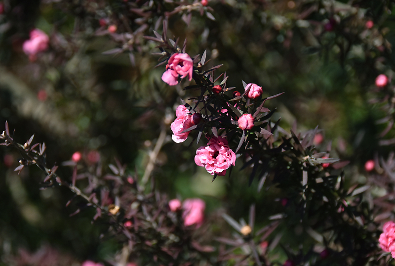 f:id:flowerTDR:20210110114034j:plain