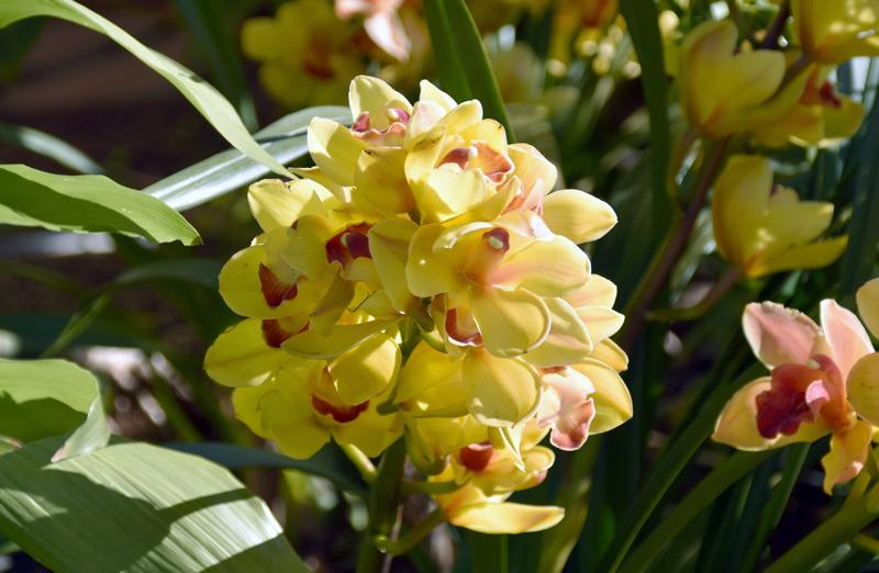 f:id:flowerTDR:20210116221702j:plain