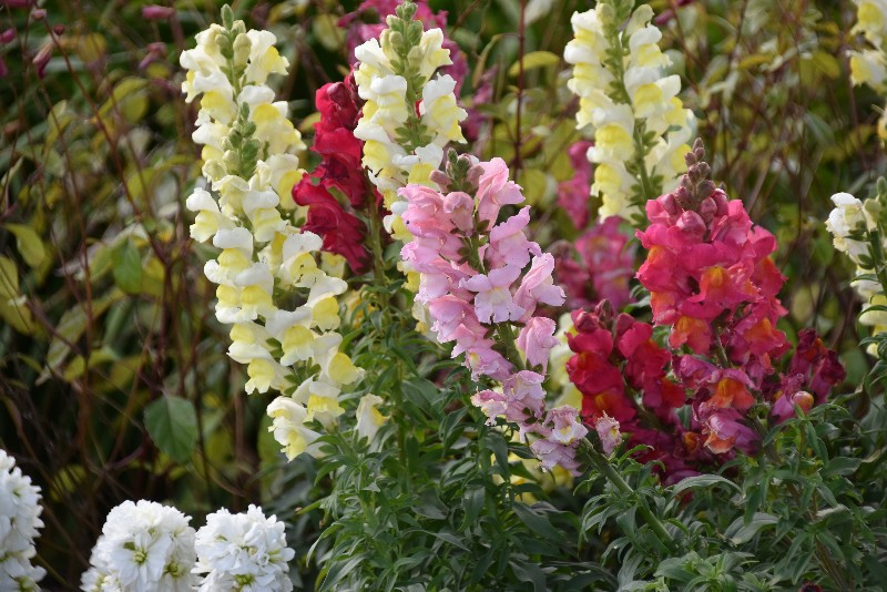 f:id:flowerTDR:20210120095854j:image
