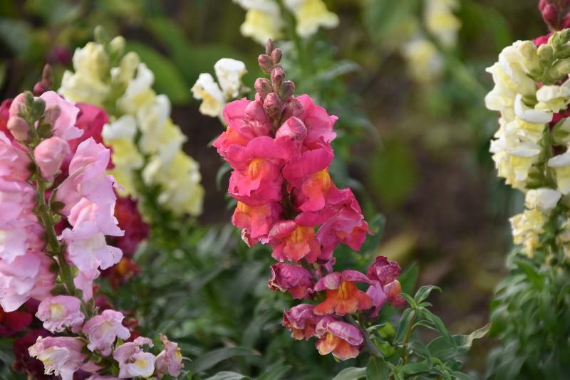 f:id:flowerTDR:20210120095900j:image