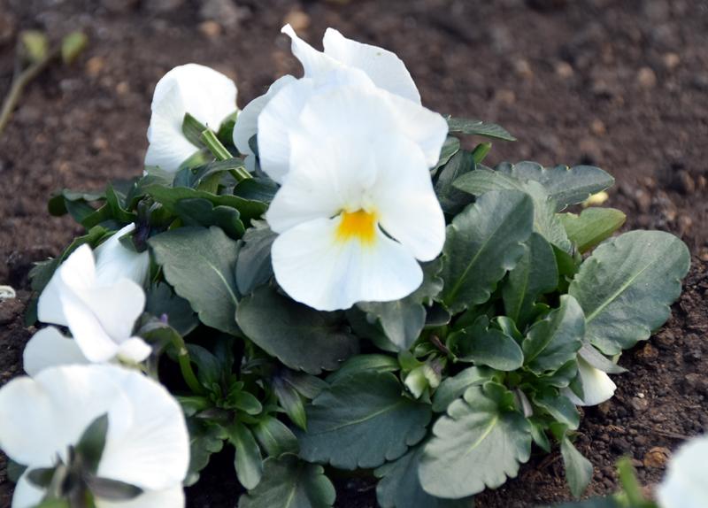 f:id:flowerTDR:20210122091635j:plain