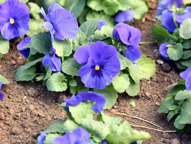 f:id:flowerTDR:20210122091649j:plain
