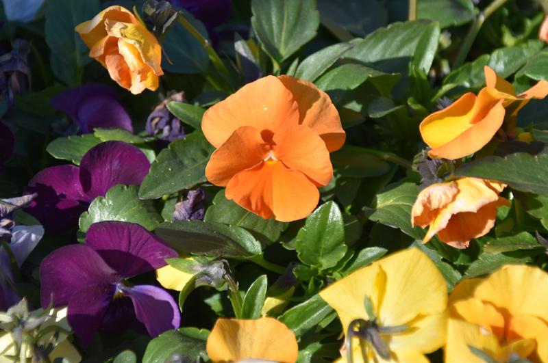 f:id:flowerTDR:20210126075924j:plain
