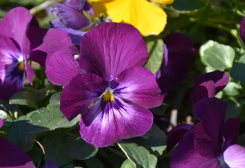 f:id:flowerTDR:20210126075933j:plain