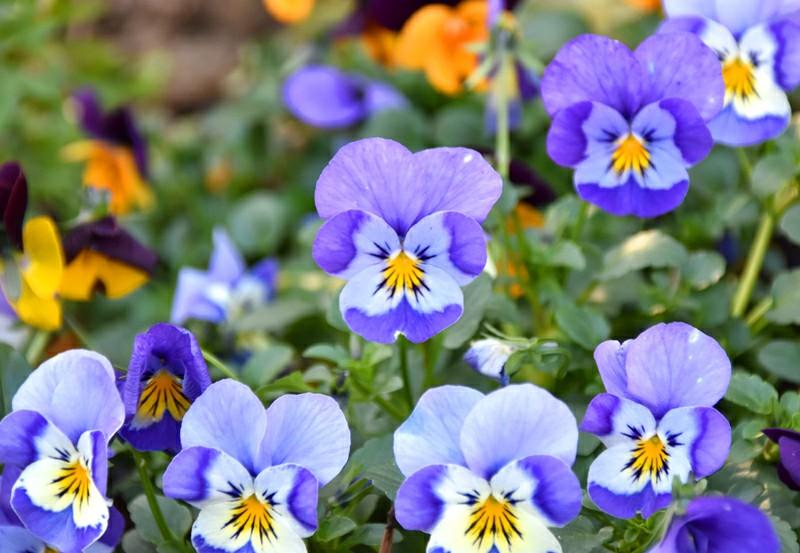 f:id:flowerTDR:20210126091748j:image