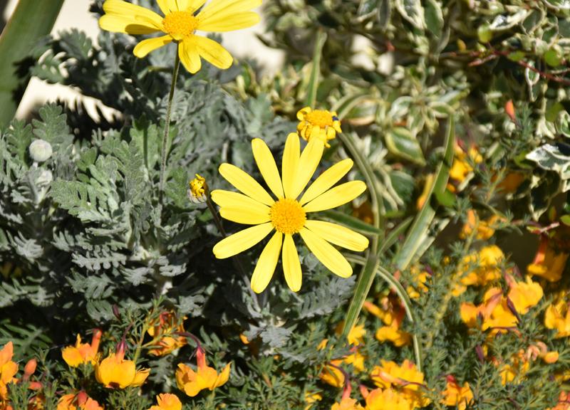 f:id:flowerTDR:20210130135506j:plain