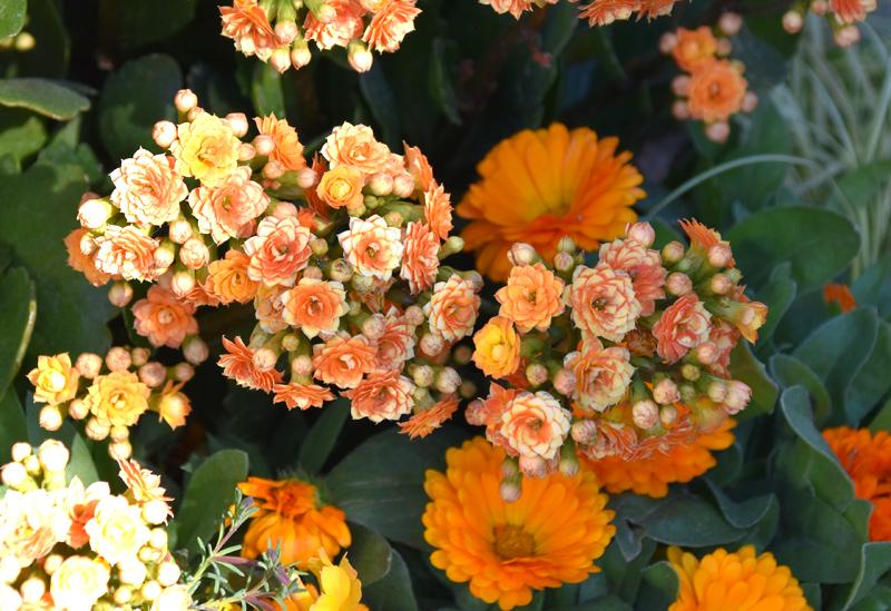 f:id:flowerTDR:20210130135515j:plain