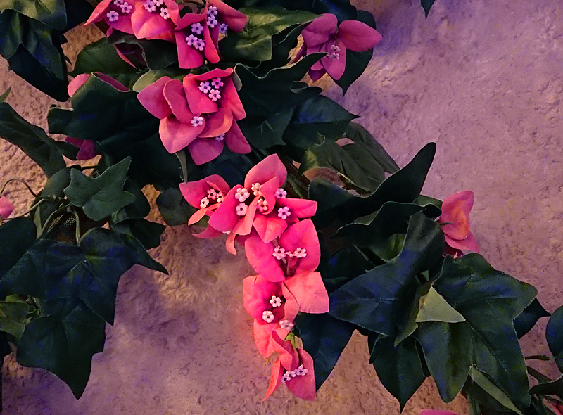 f:id:flowerTDR:20210131085339j:plain