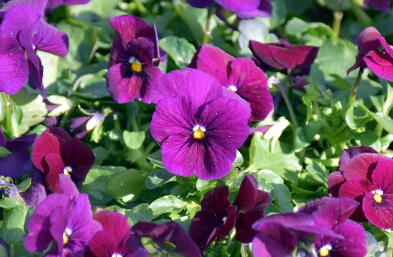 f:id:flowerTDR:20210211104044j:plain