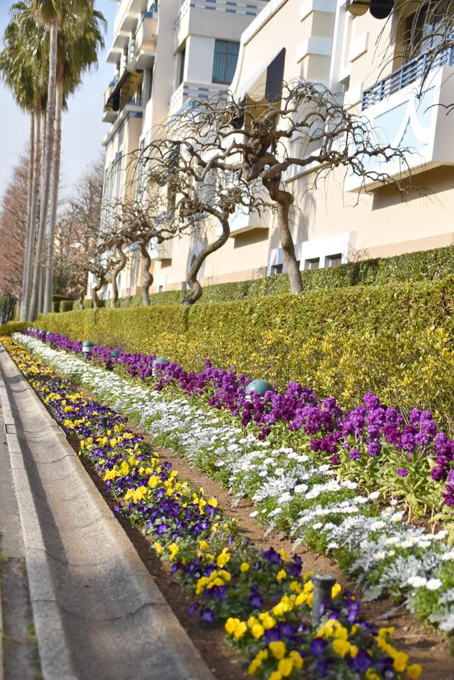 f:id:flowerTDR:20210216094600j:plain