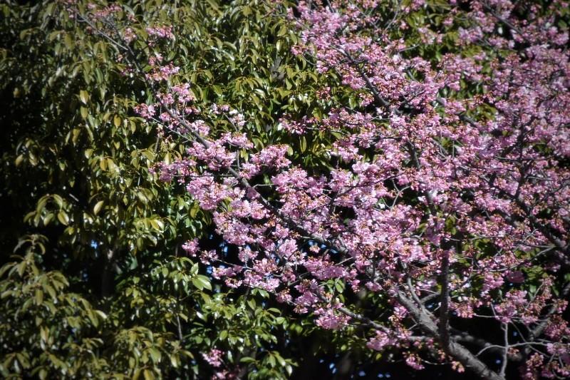 f:id:flowerTDR:20210218102236j:image
