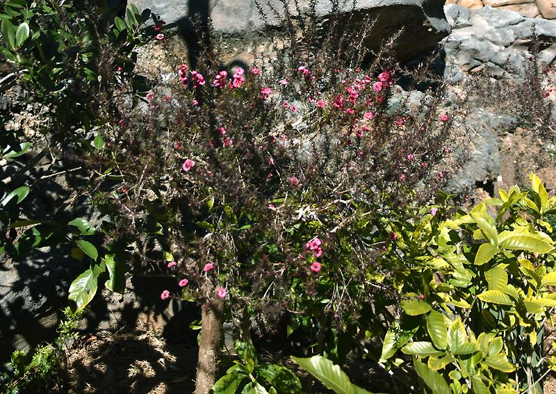 f:id:flowerTDR:20210223223004j:plain