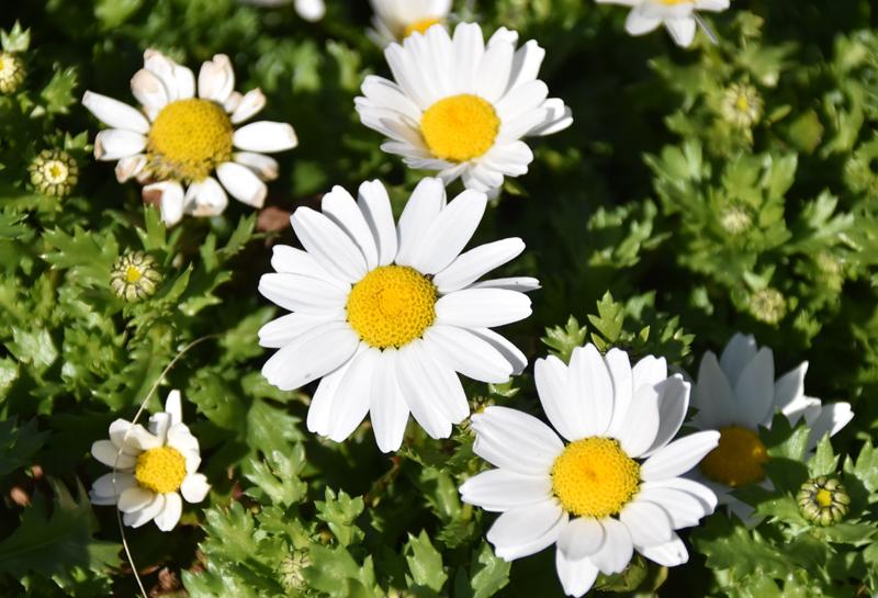 f:id:flowerTDR:20210227002439j:plain