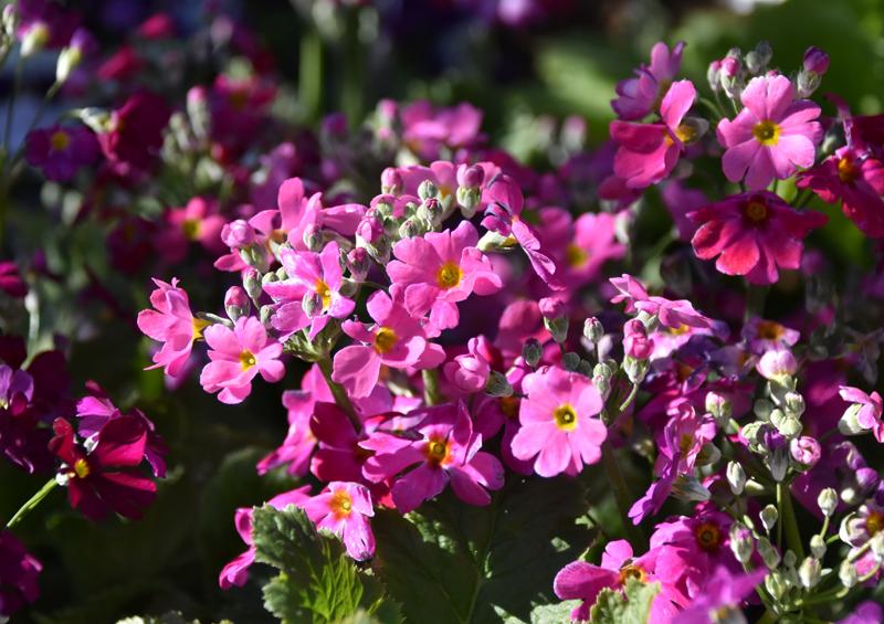 f:id:flowerTDR:20210227002449j:plain