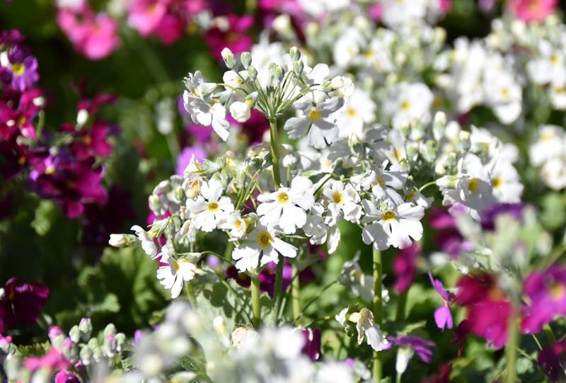 f:id:flowerTDR:20210227085625j:plain