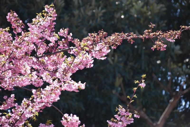 f:id:flowerTDR:20210302092021j:image