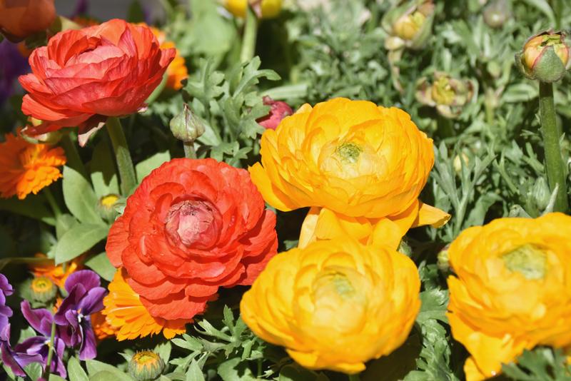 f:id:flowerTDR:20210307081609j:plain