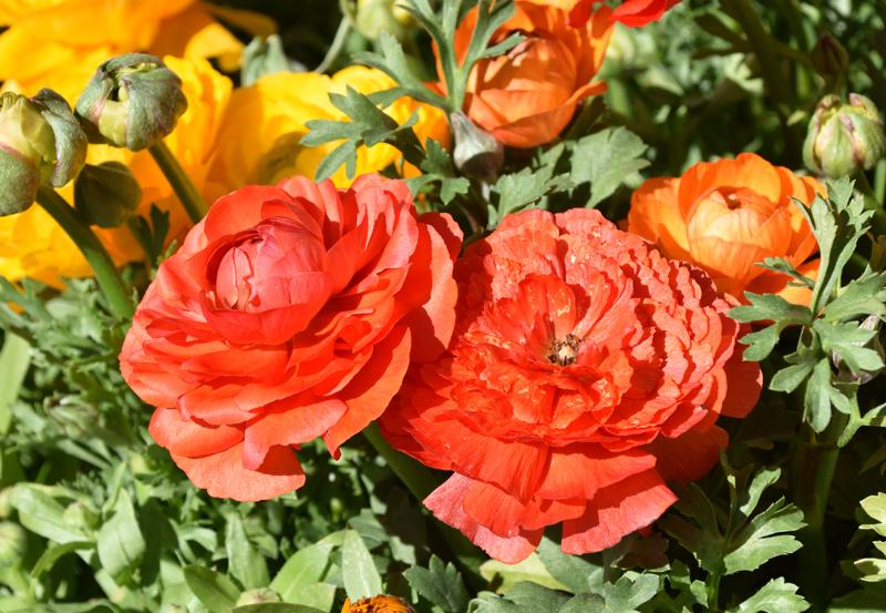 f:id:flowerTDR:20210307081900j:plain