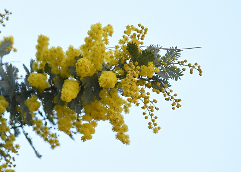 f:id:flowerTDR:20210308091516j:image
