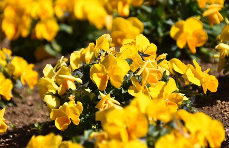 f:id:flowerTDR:20210309215611j:plain