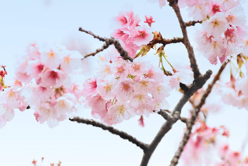 f:id:flowerTDR:20210314084755j:plain