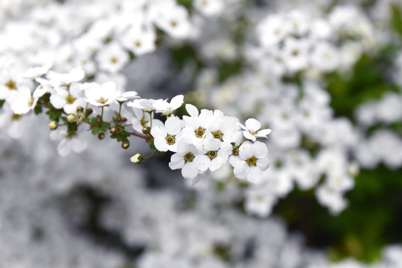 f:id:flowerTDR:20210315082051j:plain