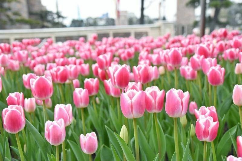 f:id:flowerTDR:20210317081005j:image