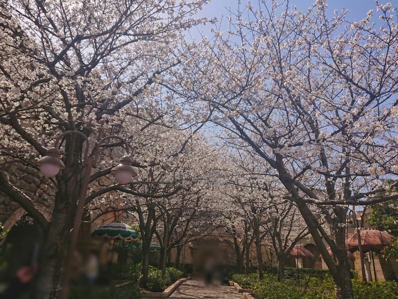 f:id:flowerTDR:20210319080529j:image