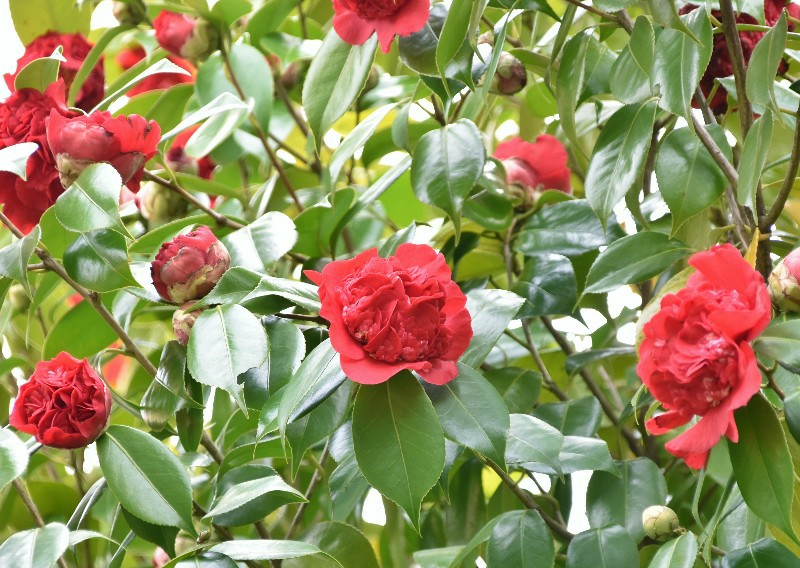 f:id:flowerTDR:20210320092913j:image