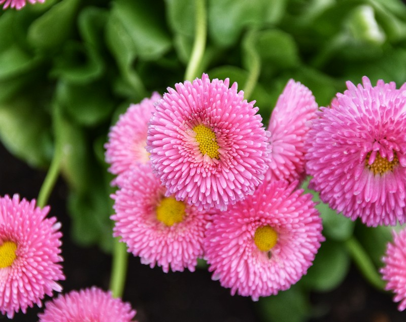 f:id:flowerTDR:20210321075246j:image
