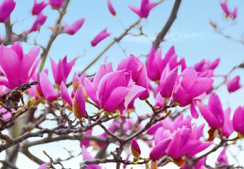 f:id:flowerTDR:20210323091814j:image