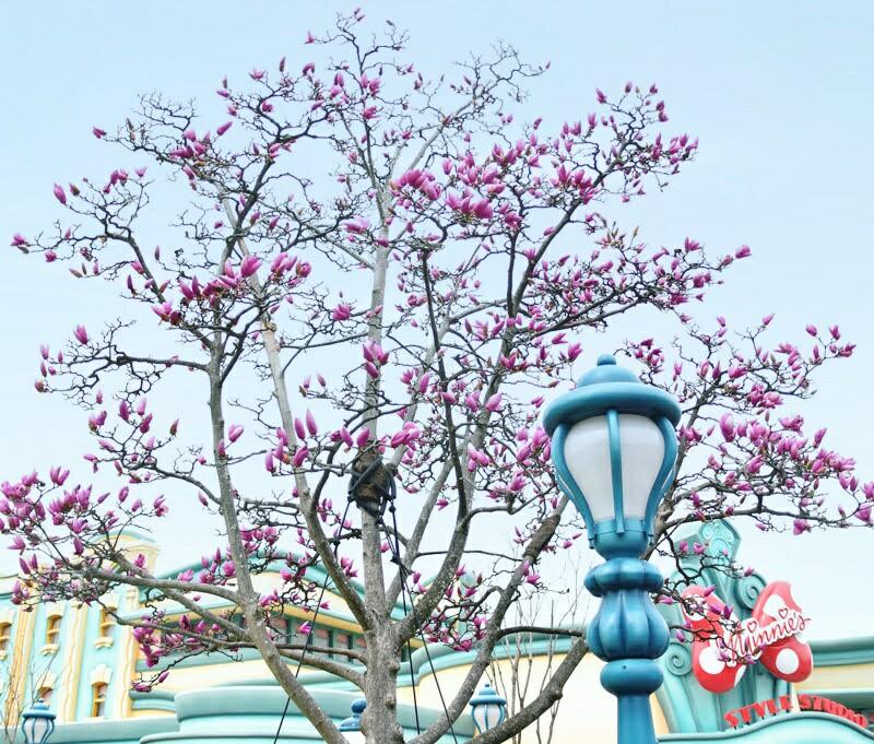 f:id:flowerTDR:20210323091825j:image