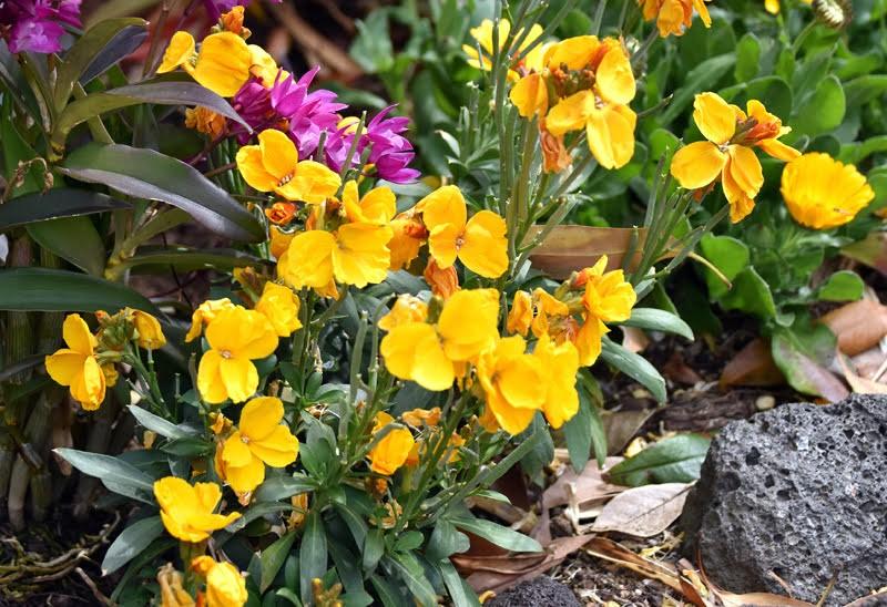 f:id:flowerTDR:20210326074437j:image