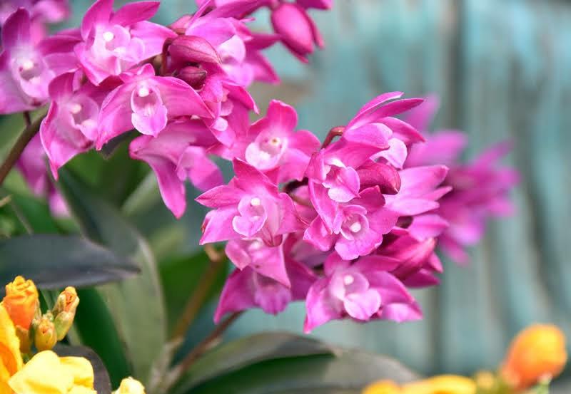 f:id:flowerTDR:20210326074524j:image